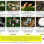 Le 4 stagioni dei funghi