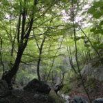 I boschi misti mesofili