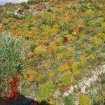 Le praterie e gli arbusteti collinari e basso-montani