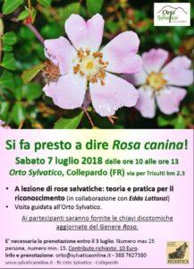 A lezione di rose selvatiche 7 luglio 2018